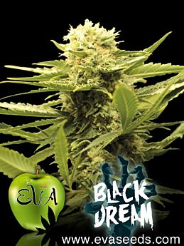 eva seeds black dream
