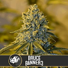 BlimBurn Bruce Banner #3 Fem