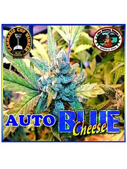 Big Buddha Blue Cheese AUTO Feminised Seeds