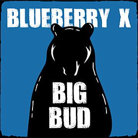 Blueberry x Big Bud