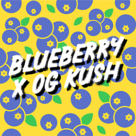Blueberry x OG Kush