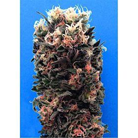 Breaking Buds Seeds Blue Sky 99% Fem