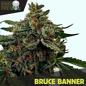 Black Skull Seeds Bruce Banner fem