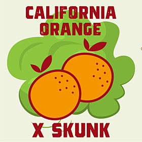 California Orange x Skunk