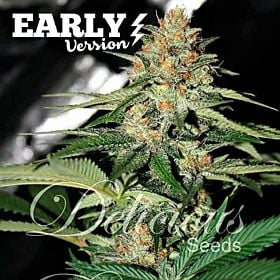 Delicious Seeds Delicious Candy Early Version Fem