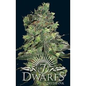 The 7 Dwarfs Seedbank Goliath Auto-flowering Feminised