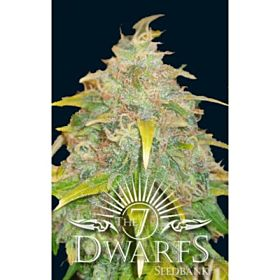 The 7 Dwarfs Trojan Auto-flowering Feminised Plant