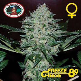 Big Buddha Freeze Cheese '89 Feminised Seeds