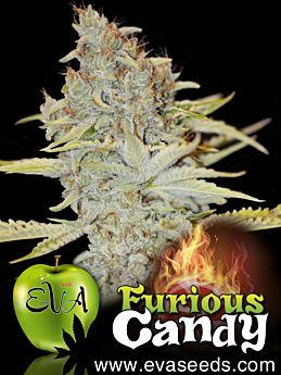eva seeds furious candy