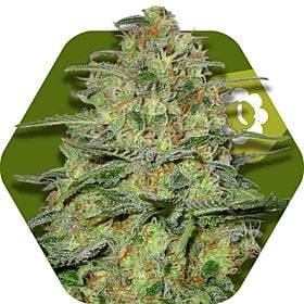 Green Monster Auto