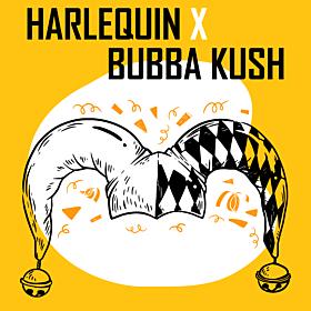 Harlequin x Bubba Kush