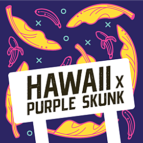 Hawaii x Purple Skunk