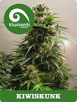 kiwi seeds kiwiskunk