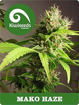 kiwi seeds mako haze