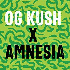 OG Kush x Amnesia