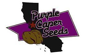 Purple Caper Seeds Indoor Mixed Pack Reg