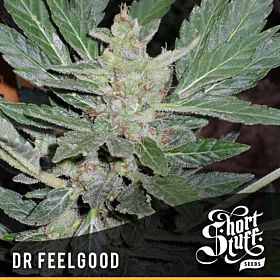 short stuff dr feelgood