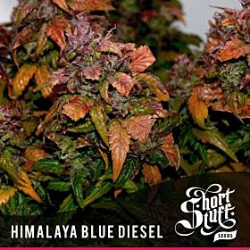 short stuff himalaya blue diesel