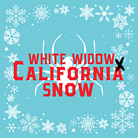 White Widow x California Snow