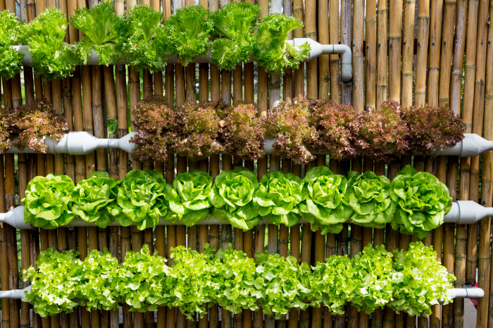 10 Reasons to Switch to Hydroponic Growing Right Now