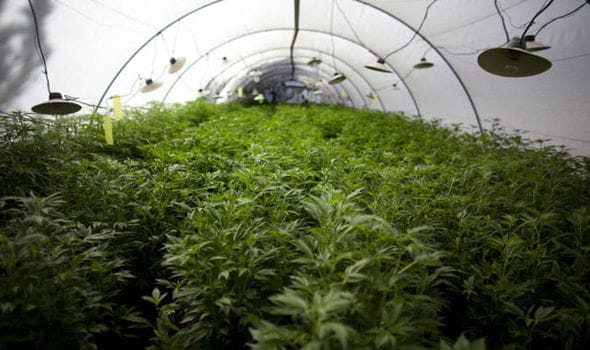 Durham Relaxes Laws On Cannabis Growers