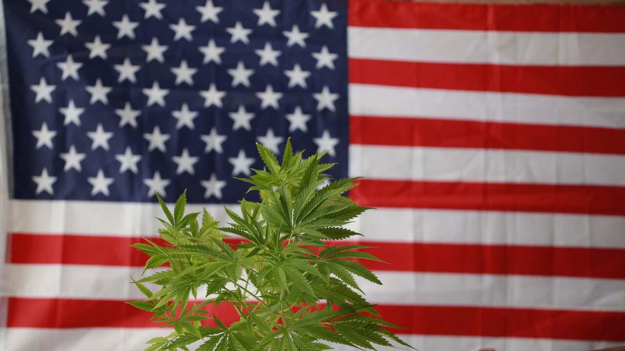 America's Cannabis Black Market is Still Thriving