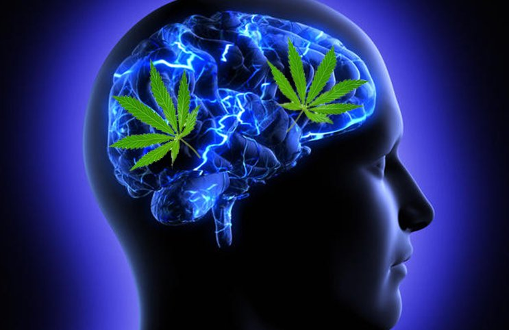 Cannabis and Memory – What's the Story?