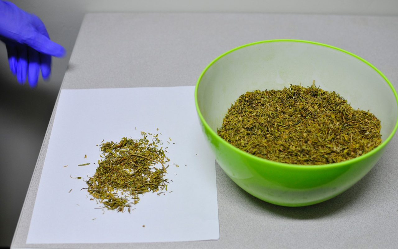 Fancy a batch of government-grade cannabis? Probably not...