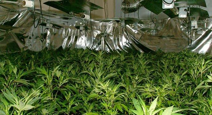 how to grow marijuana in your house