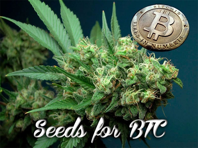 seeds for bitcoin