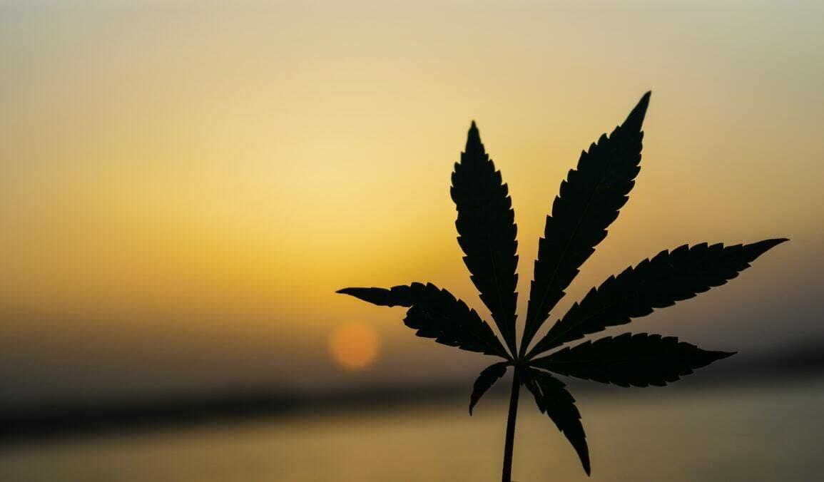 Cannabis leaf silhouette against sunset