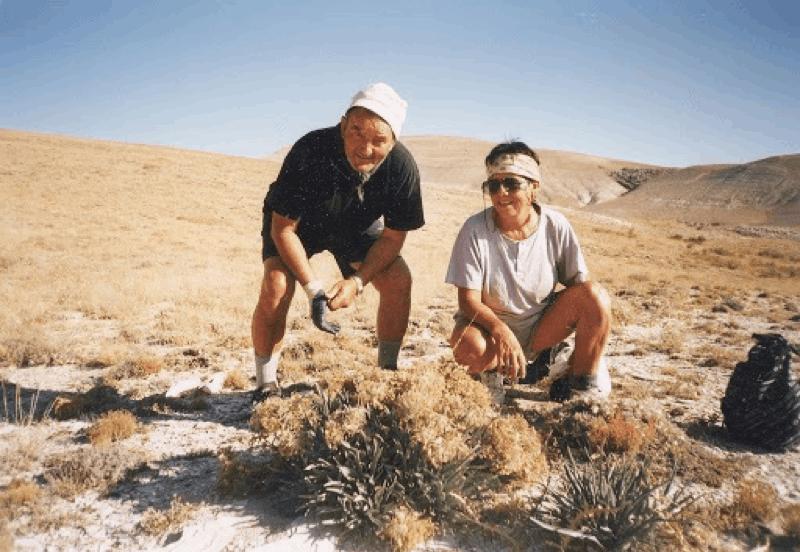 Alpine Seeds