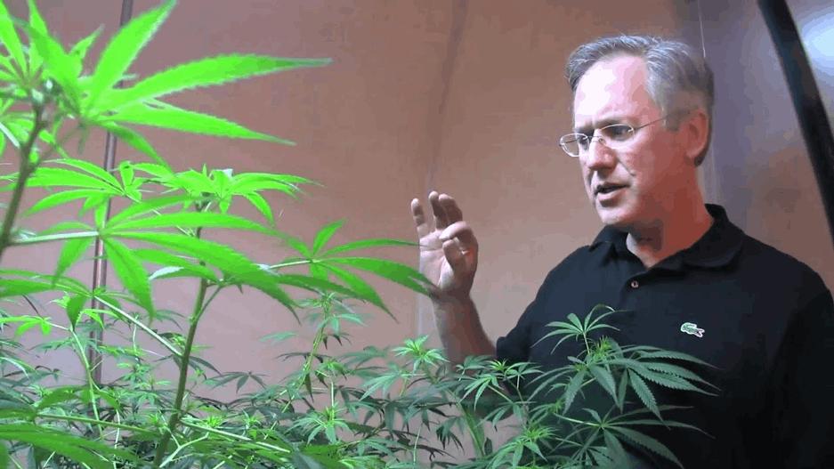 Centennial Seeds - Ben Holmes and cannabis