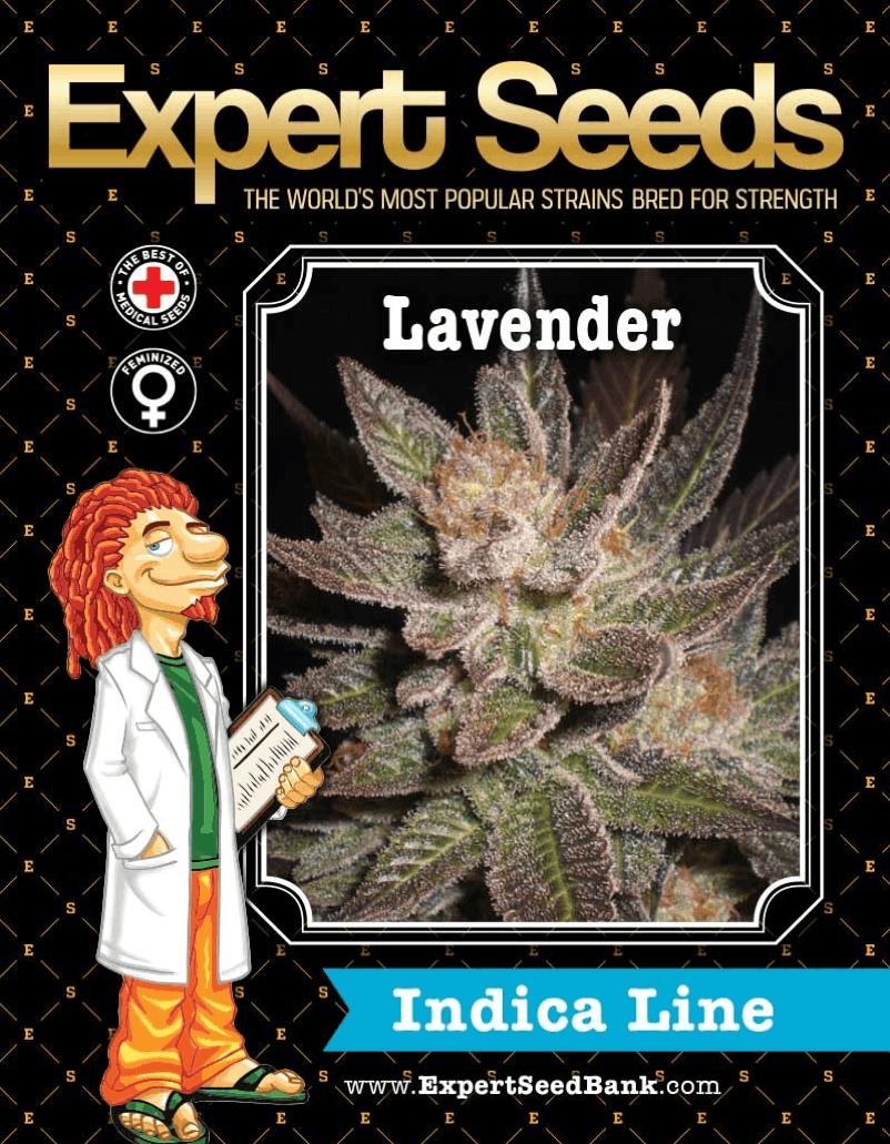 Expert Seeds - Lavender