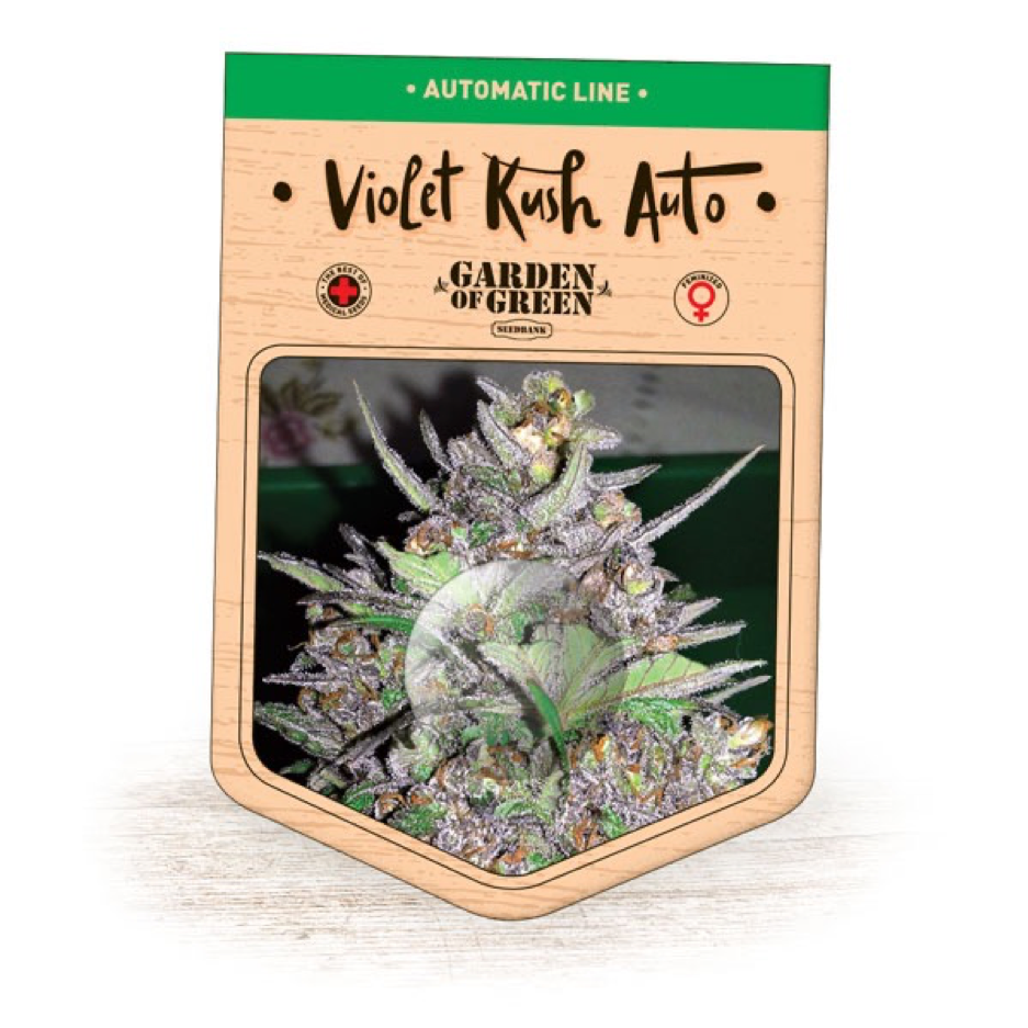 Garden of Green - Violet Kush Auto