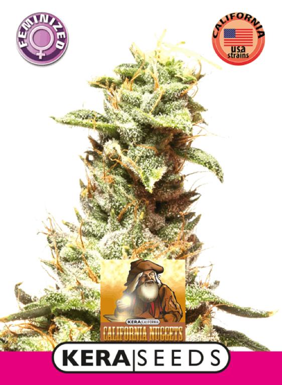 Kera Seeds - Kera California Nuggets strain