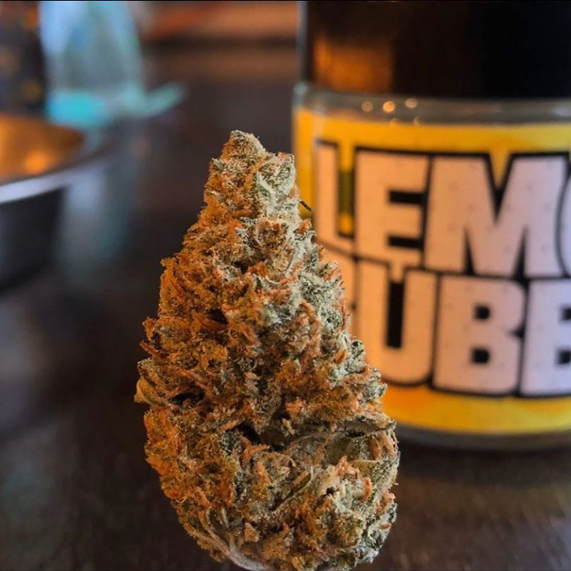 Pheno Finder Seeds - Lemon Bubble