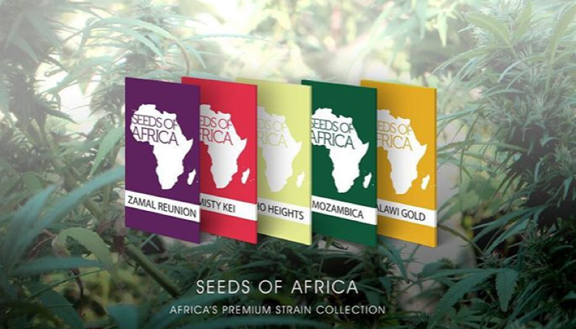 Seeds of Africa strain collection