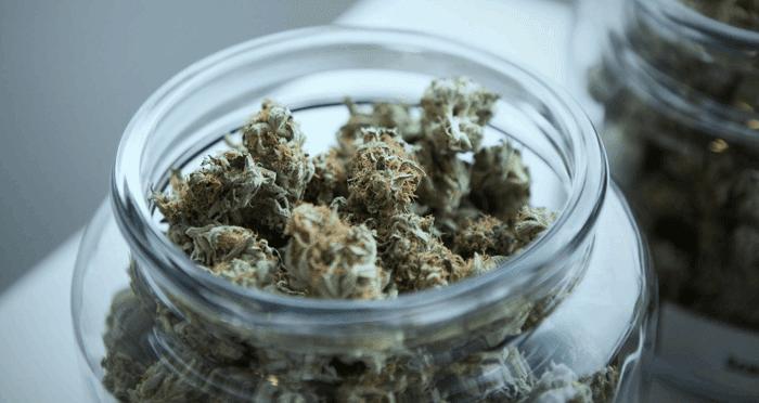 High-quality cannabis in a jar