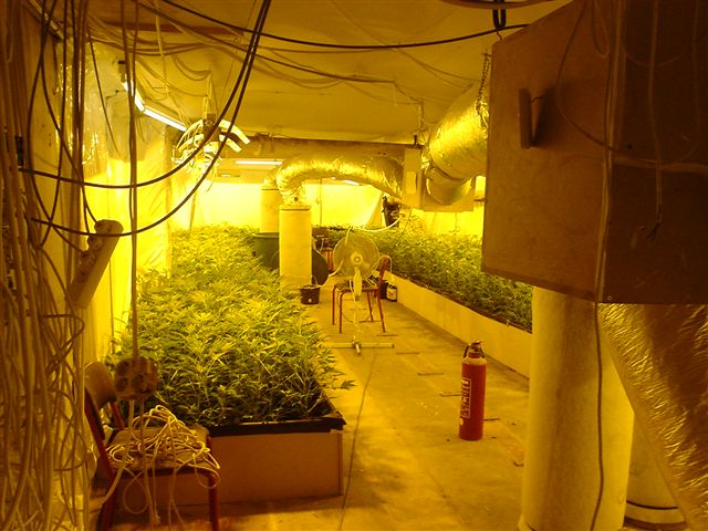 Blog What You Need To Know About Indoor Marijuana